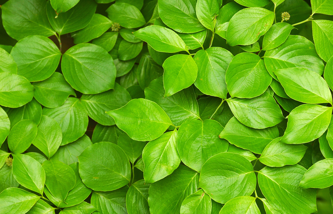 blog-colour-brand-green-plants-01